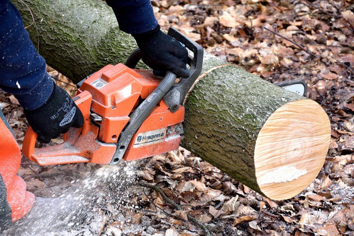 """Képtalálat a következőre: """"fa- és bokroskivágások"""""""